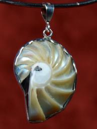 Zilveren hanger met een Nautilus schelp